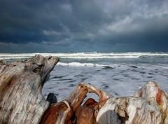 A storm brewing in the East (Magryciak) Tags: newzealand sky storm beach weather nikon driftwood 2009 gisborne