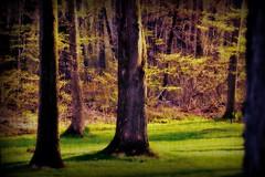trees (blmiers2) Tags: trees newyork nature alberi bomen nikon rboles arbres  bume  rvores    d3100 blm18 blmiers2