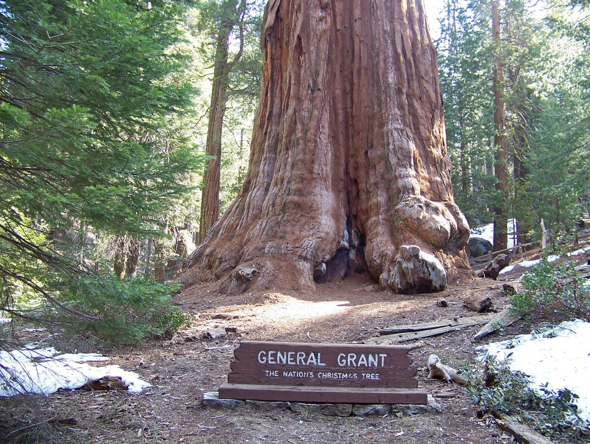 General Grant is the largest