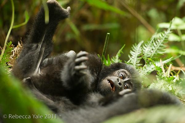RYALE_Rwanda_Uganda_Safari-116