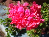 Flower Macro (AtomicAJ) Tags: sonydscw90