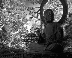 Buddha in Black and White (musicmuse_ca) Tags: goldengatepark blackandwhite bw 15fav statue 1025fav 510fav japanese interestingness buddha 2550fav zen wa japaneseteagarden tajima hagiwara interestingness116 i500 hagiwaramakoto