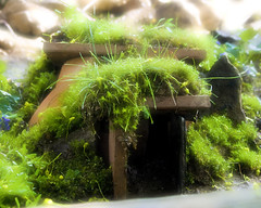 The Fairy House (2) (Cayusa) Tags: house garden fairy faries fairyhouse