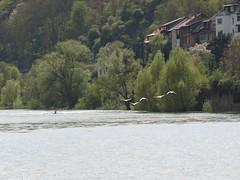 Rhine River Apr 08 112 (MurphMutt) Tags: castle germany rhineriver