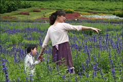 大溪花海043