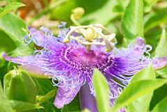 (ONE/MILLION) Tags: new old flowers arizona plants love nature landscape dead outdoors photo google flickr purple image blossoms alive blooms onemillion williestark