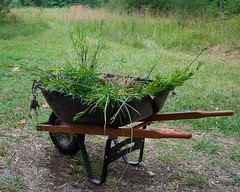 Aquatic Plants for Mulching