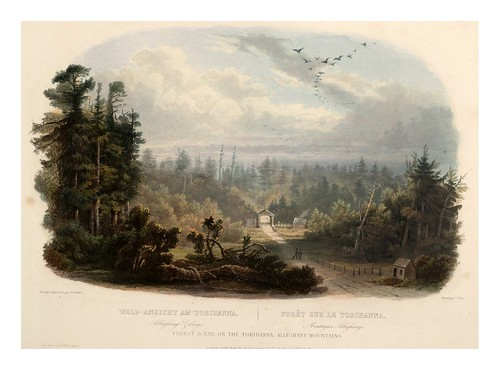 0004r- Bosque en la Tobihanna montañas Allleghanys -com marco