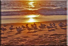 GOOD NIGHT BIRDIES (fantartsy JJ *2013 year of LOVE!*) Tags: ocean california park flowers sea vacation cute beach home nature beauty birds sand squirrels waiting babies searchthebest sweet gulls cottage wallart oceanside urbannature dreams hopes southerncalifornia inspire soe naturesfinest placesilove supershot flickrsbest passionphotography the4elements platinumphoto ultimateshot wowiekazowie diamondclassphotographer flickrdiamond citrit ysplix theperfectphotographer multimegashot magicdonkeysbest worldsmoststunning lahabreheights finephotoshopdesign passionateinspirations