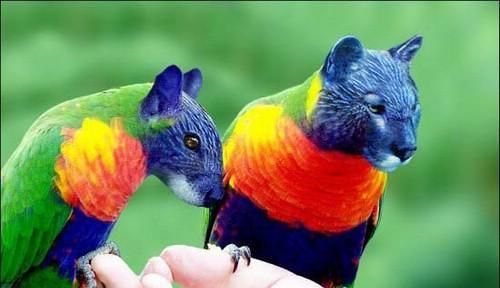 حيوانات وطيور لم تشاهدها من قبل  ( فوتوشوب ) 2822611853_b004b36882.jpg?v=0