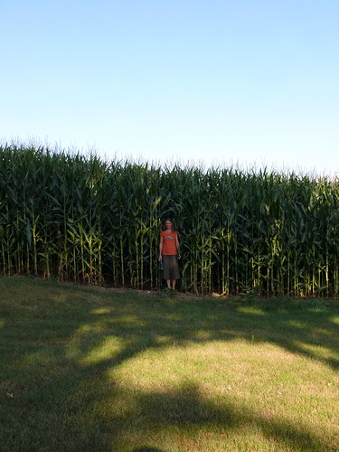 Good corn growth