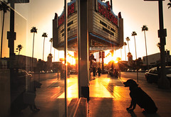 I Wait For My Dad (TJ Scott) Tags: california sunset dog reflection shopping losangeles waiting bookstore palmtrees mydog venturablvd barnesnobles studiocity bookstar