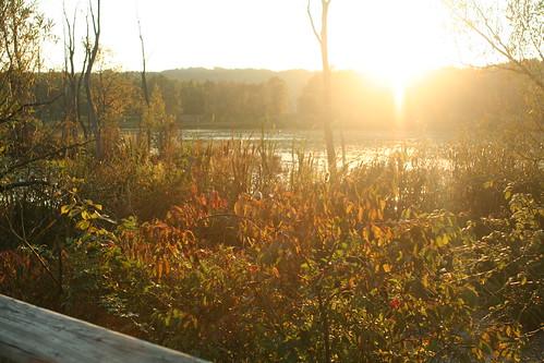 beaver_dammed_wetland