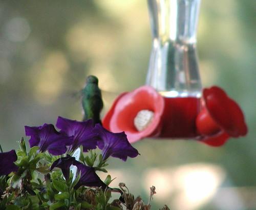 hummingbird9-23-04