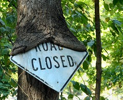 Sign Eating Tree (cindy47452) Tags: old tree sign indiana 100views 400views 300views 200views 500views roadclosed duboiscounty ibeauty p183 protectedbywk
