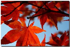 AUTUMN (PHOTOPHOB) Tags: autumn fall sex flickr estate herbst zomer verano otoo vero t outono jesie lato lto sonbahar efterr colourartaward photophob