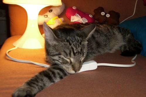 gestern.cat
