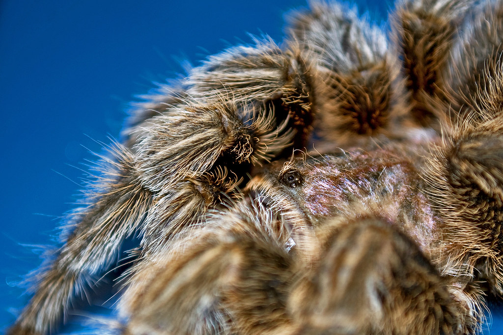 The World S Best Photos Of Bite And Recluse Flickr Hive Mind