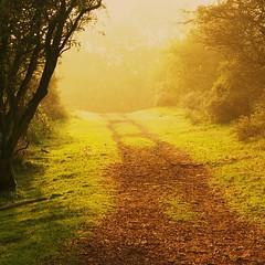 Seasons (Johan_Leiden) Tags: autumn light sun mist fall netherlands dutch forest seasons path dunes dune herfst nederland thenetherlands zon soe zonlicht amsterdamsewaterleidingduinen duneforest