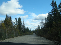 Very nice logging road