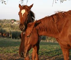 Cavalli (Slow Flyer) Tags: cavalli