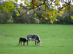 Just grazing (bLaCkBeRrY jAm) Tags: yahoo:yourpictures=landscape