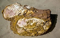 Richmond Fossils, QLD (C) 2008