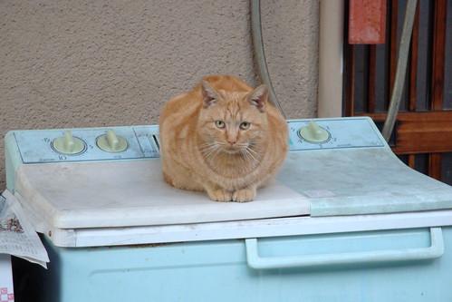 古い洗濯機の上の猫
