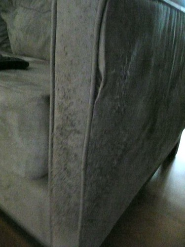 Scratched couch
