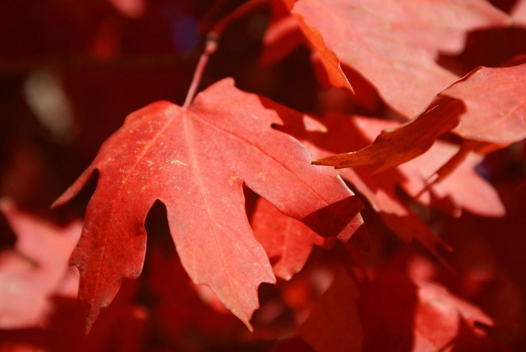 leaves_03
