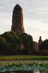 Phra Ram Lotus Pond