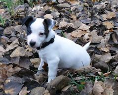 joe (lockenkopf) Tags: dog joe auesee hunde projekt365