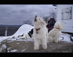-15C  Mountain Top Yodelling Flickr Moment (Johny Day) Tags: sylvie barbie holly hollywood flickrmoment maggy standardpoodle spcr oneofmybest canicheroyal thelittledoglaughed johnyday johnyday© explore2008 barbieholiday