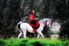 آلخيل ملت رڪضهآ خلف قدآم ۈين آنت يآخيآلهآ ملت آلخيل (★Ᾰΐΐα-7αseβκ) Tags: red white essa hourse