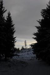 Altknig (karsten13) Tags: feldberg 30112008