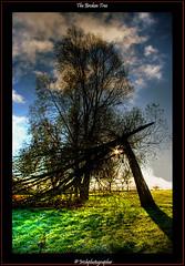 The Broken Tree (Irishphotographer) Tags: autumn trees ireland sunset tree art nature sunshine sunrise sureal irishart kinkade catart beaut