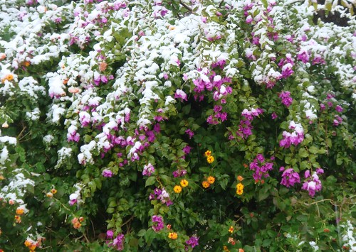 snowy flowers by you.