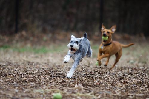 Selinsgrove Dog Park