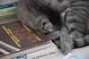 fufi e la dieta cinese (zecaruso) Tags: italy cat italia libro sicily caruso palermo distillery gatto sicilia ciccio addaura mariafufi zecaruso cicciocaruso