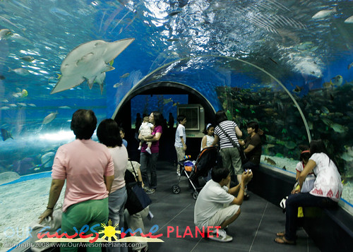Manila Ocean Park-28
