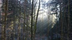 Bright Spot Lichtblick (Aah-Yeah) Tags: white mist fog bayern frost bright spot hoar reif achental chiemgau lichtblick