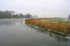 Rottemeren (Marianne de Wit) Tags: winter ice dutch landscape wintertime dutchlandscape dutchwinter schaatsen rottemeren nationalparkdehogeveluwe icescating nederlandsewinter nederlandselandschappen