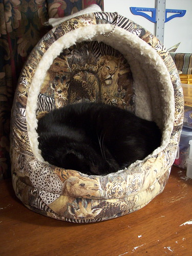 Noah in cat bed 1