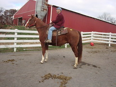 Ac4H - Socks (Another Chance for Horses) Tags: horse chestnut ac4hcom