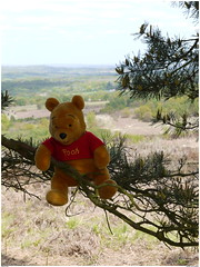 Pooh just hanging around (éric) Tags: sussex pooh ashdownforest imagemagick uploadscript im:opts=rotate270 photo:id=p1010256jpg