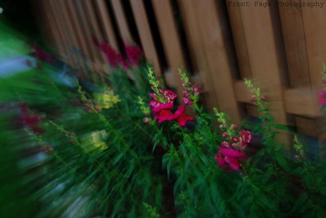 Floral Warp