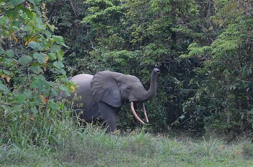 Elephant_01©Copyright_Reto Kuster_E-Mail kuster.reto@gmx.net
