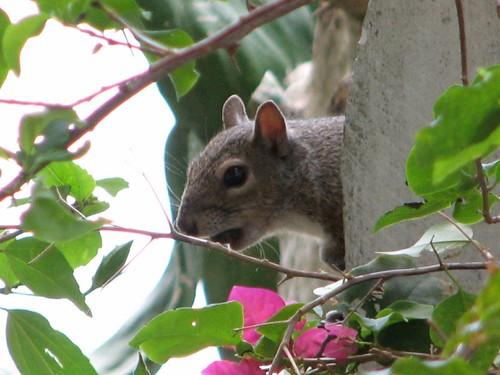 sammy squirrel