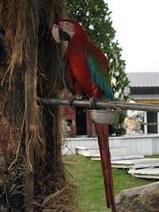 20080410-鳥2-15