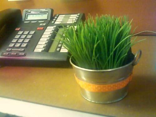 cute grass